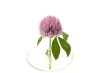 Floating Vase / RIPPLE -oodesign-